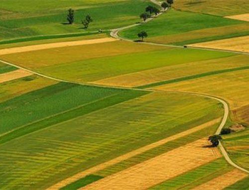 როგორ უნდა მოვიპოვოთ საკუთრების უფლება  მიწის ნაკვეთზე  იმ შემთხვევაში თუ არ გაგვაჩნია საკუთრების უფლების დამდგენი დოკუმენტი